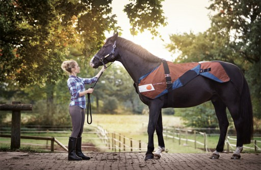 Horses Welcome the BEMER Touch